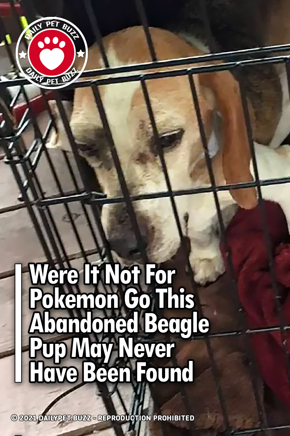 Were It Not For Pokemon Go This Abandoned Beagle Pup May Never Have Been Found