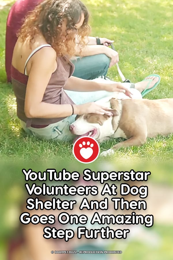 YouTube Superstar Volunteers At Dog Shelter And Then Goes One Amazing Step Further