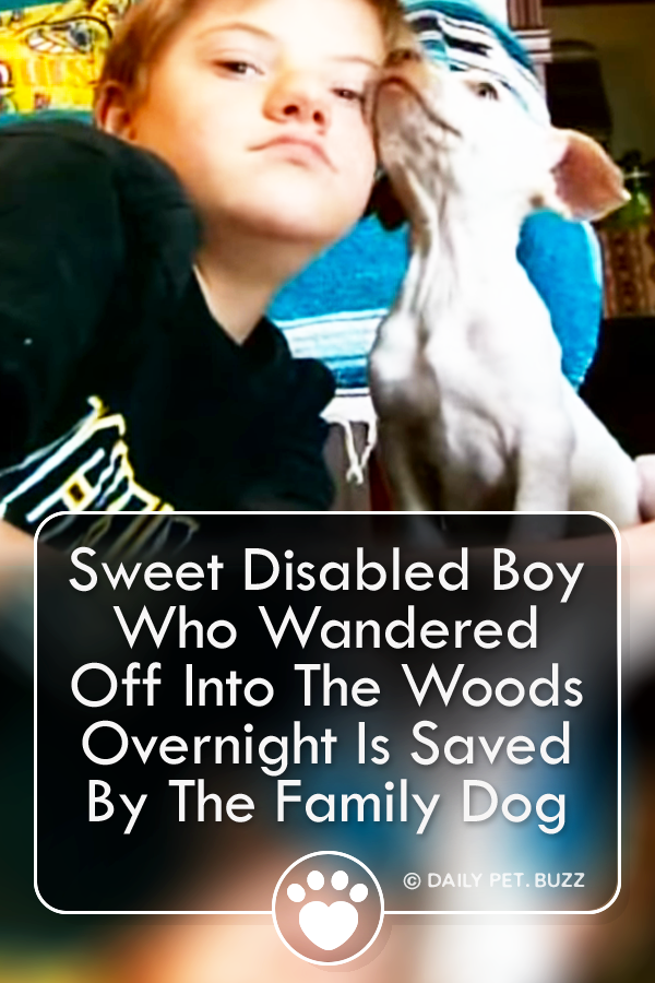 Sweet Disabled Boy Who Wandered Off Into The Woods Overnight Is Saved By The Family Dog