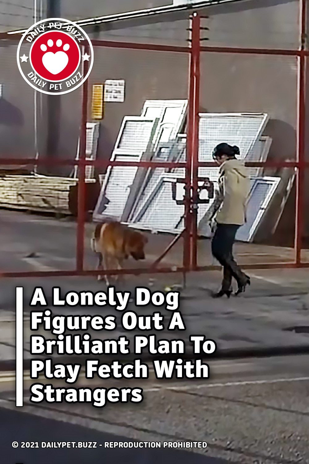 A Lonely Dog Figures Out A Brilliant Plan To Play Fetch With Strangers