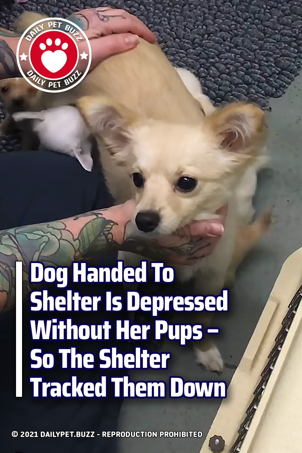 Dog Handed To Shelter Is Depressed Without Her Pups – So The Shelter Tracked Them Down