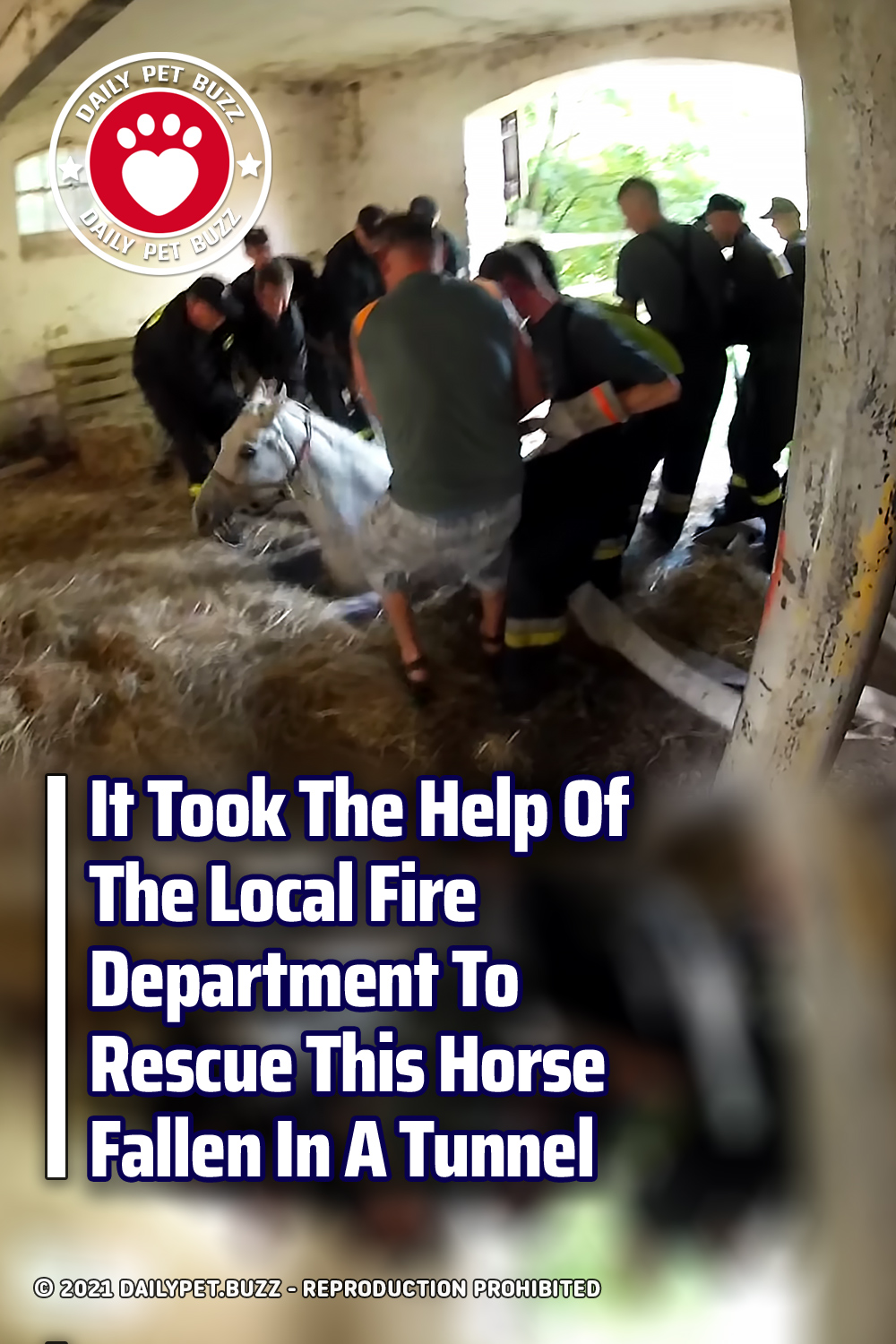 It Took The Help Of The Local Fire Department To Rescue This Horse Fallen In A Tunnel