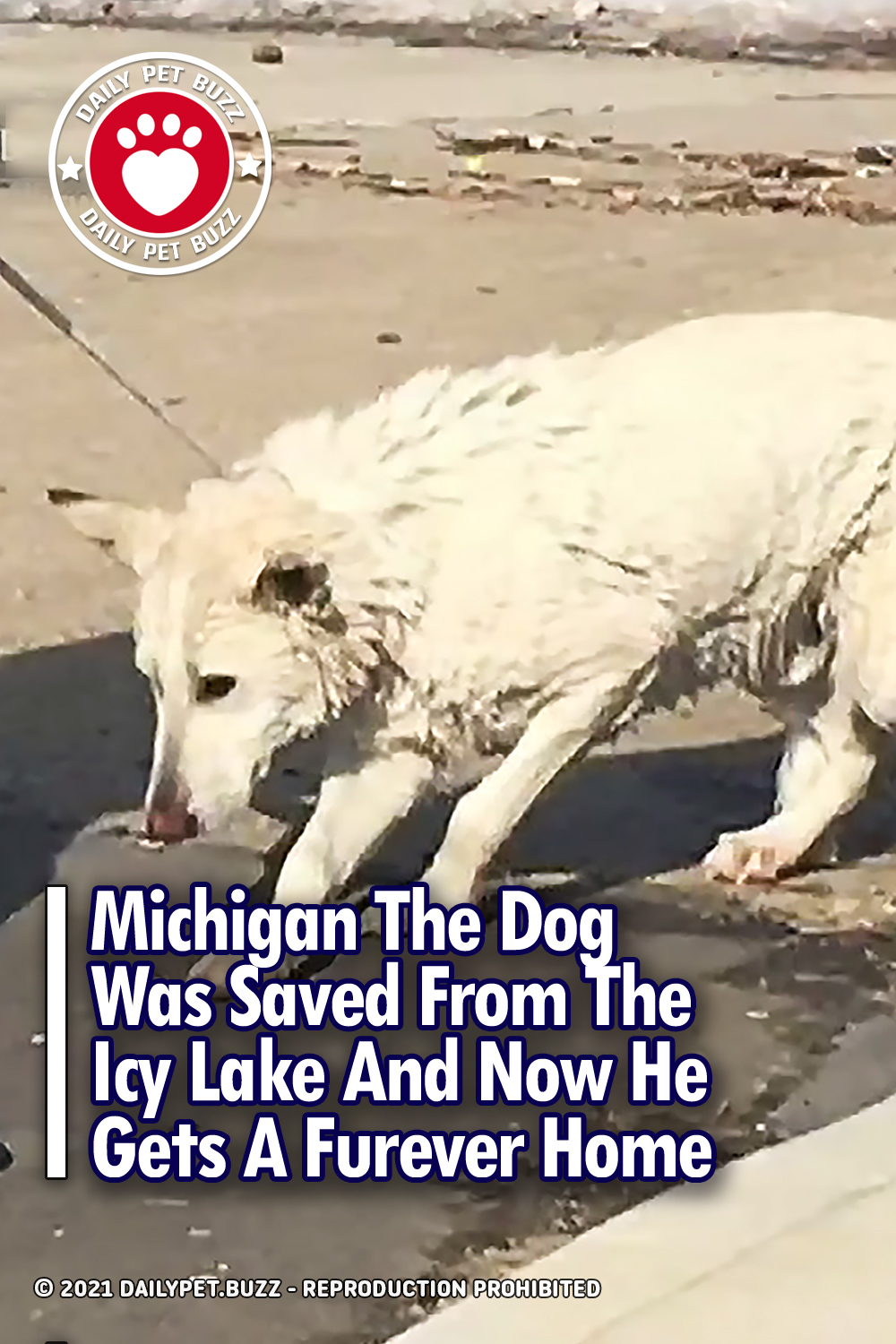 Michigan The Dog Was Saved From The Icy Lake And Now He Gets A Furever Home