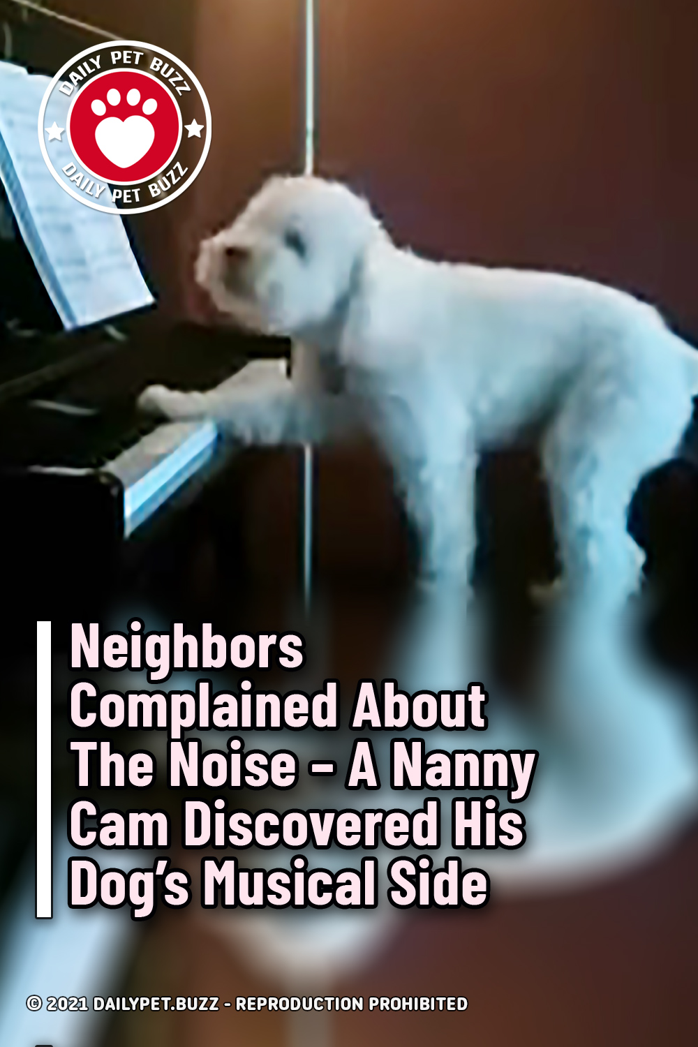 Neighbors Complained About The Noise – A Nanny Cam Discovered His Dog\'s Musical Side