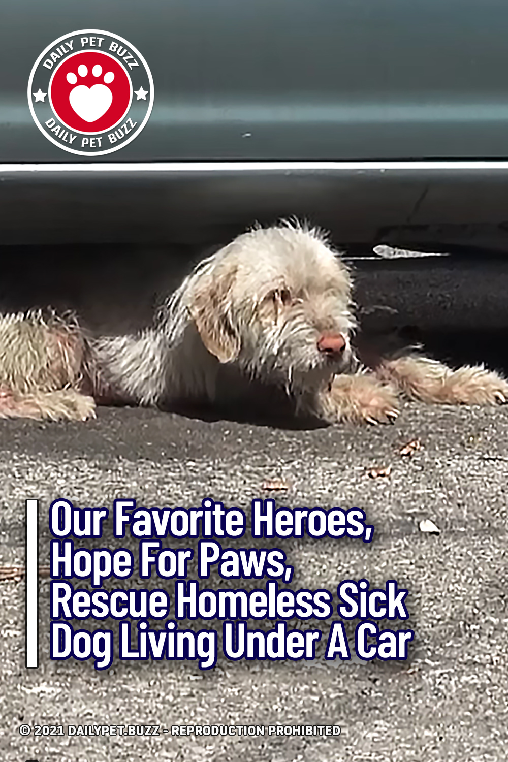 Our Favorite Heroes, Hope For Paws, Rescue Homeless Sick Dog Living Under A Car