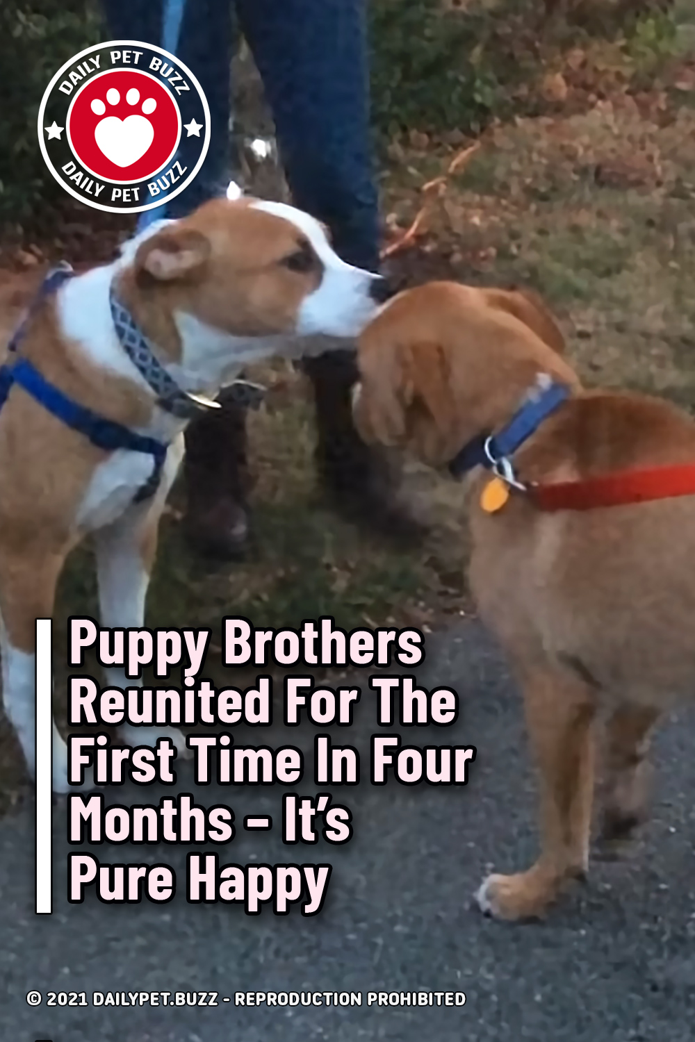 Puppy Brothers Reunited For The First Time In Four Months – It\'s Pure Happy