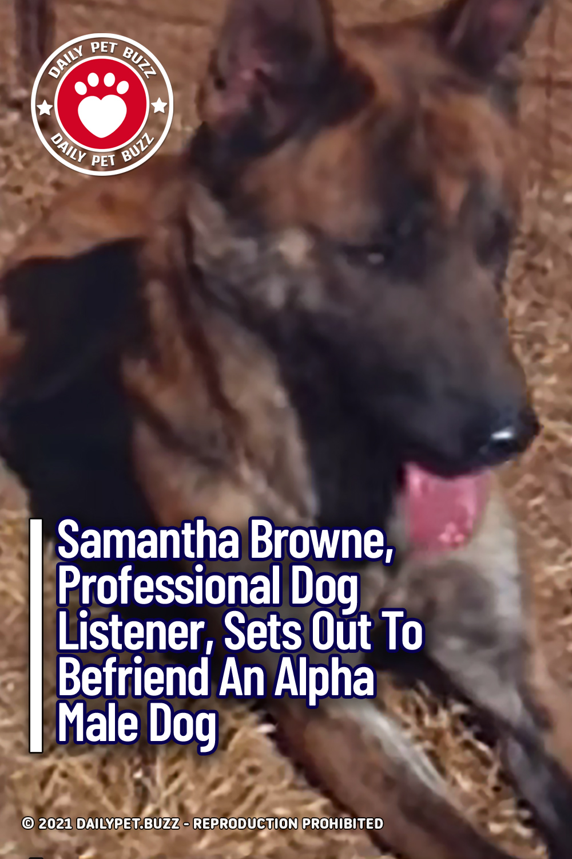 Samantha Browne, Professional Dog Listener, Sets Out To Befriend An Alpha Male Dog