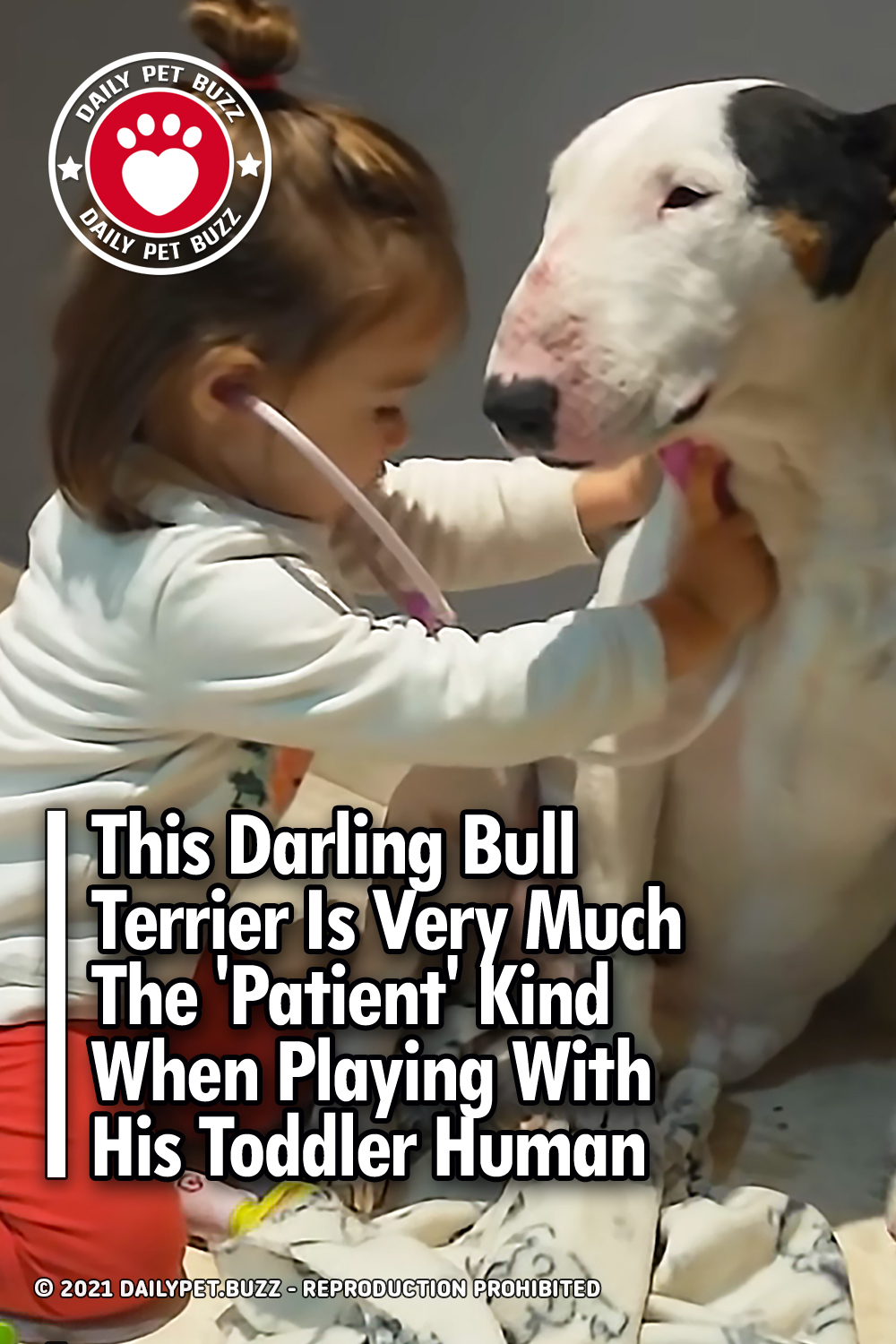 This Darling Bull Terrier Is Very Much The \'Patient\' Kind When Playing With His Toddler Human