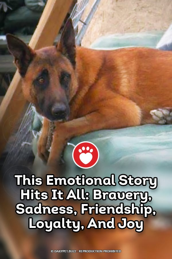 This Emotional Story Hits It All: Bravery, Sadness, Friendship, Loyalty, And Joy