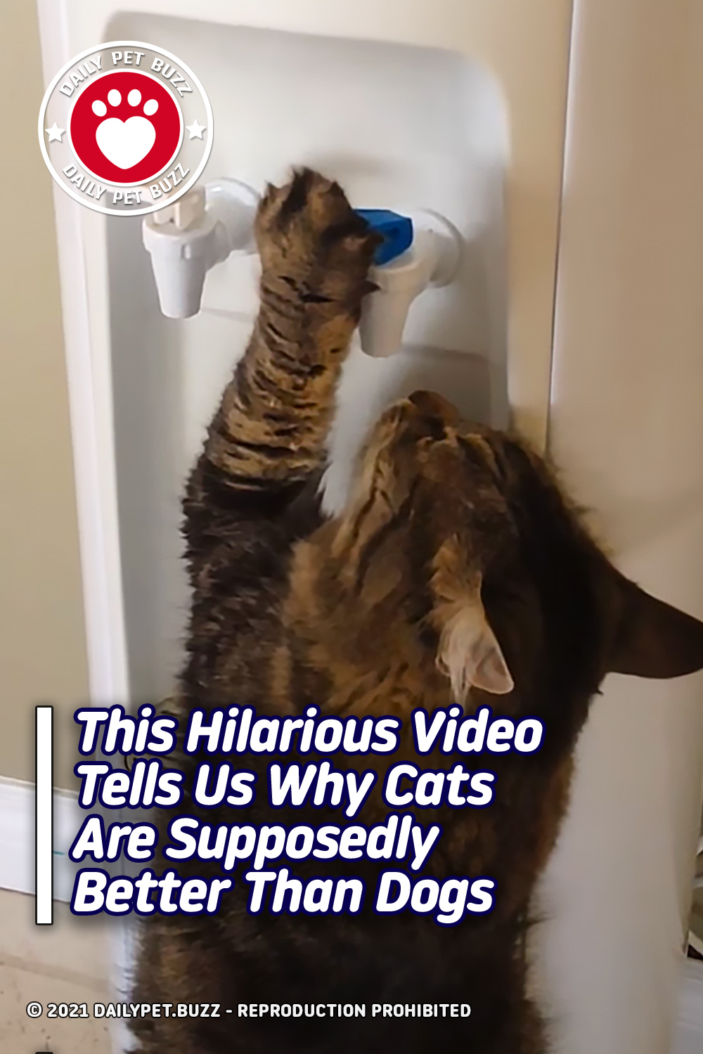 This Hilarious Video Tells Us Why Cats Are Supposedly Better Than Dogs