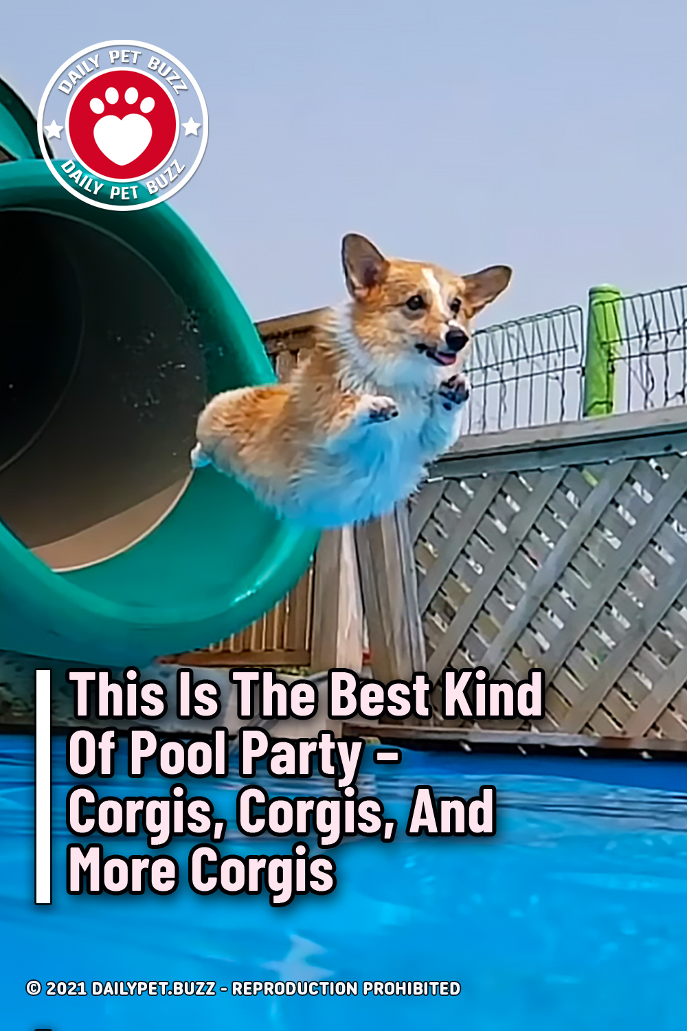 This Is The Best Kind Of Pool Party – Corgis, Corgis, And More Corgis