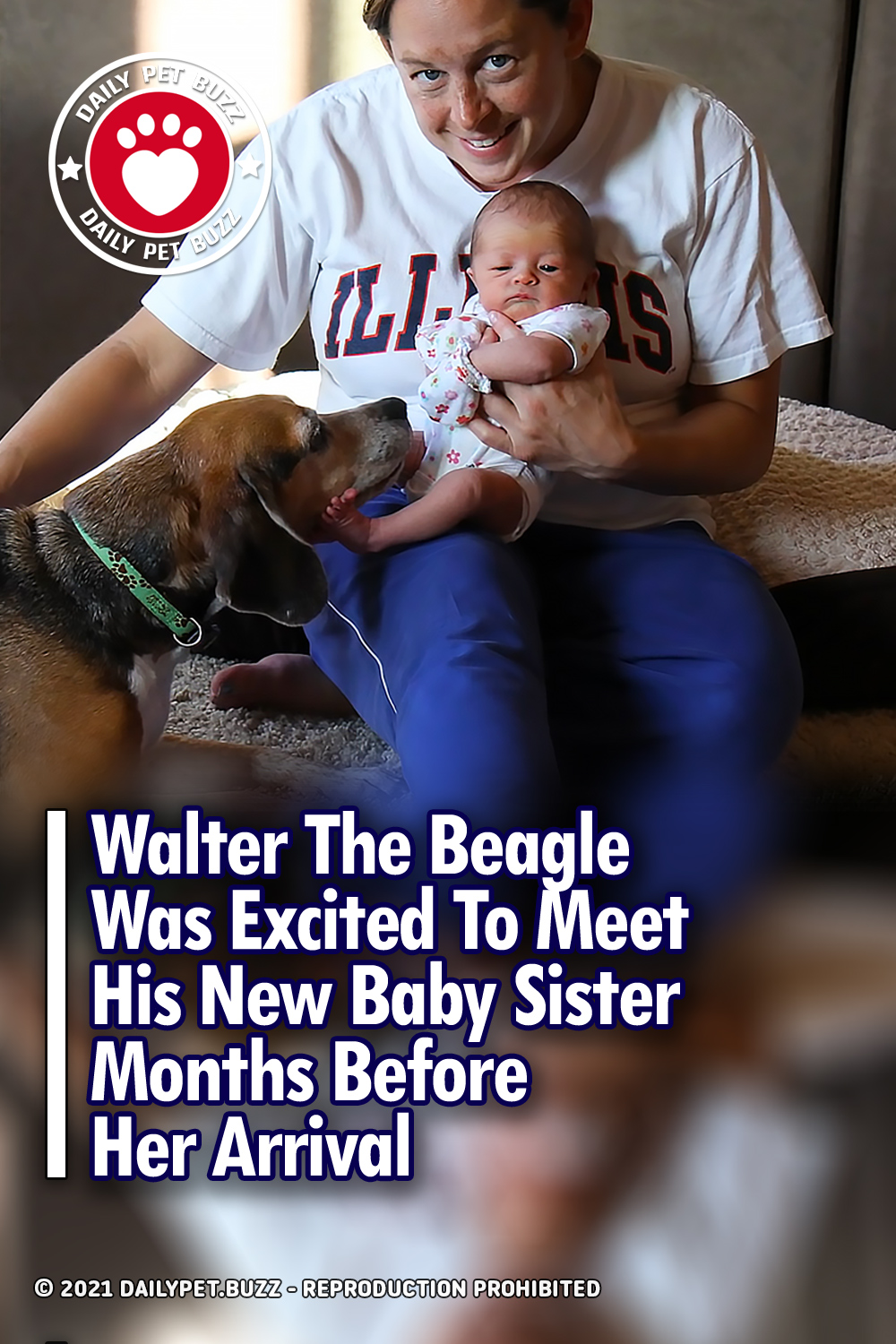 Walter The Beagle Was Excited To Meet His New Baby Sister Months Before Her Arrival