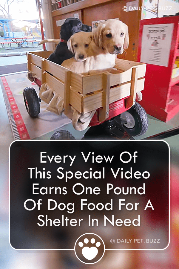 Every View Of This Special Video Earns One Pound Of Dog Food For A Shelter In Need
