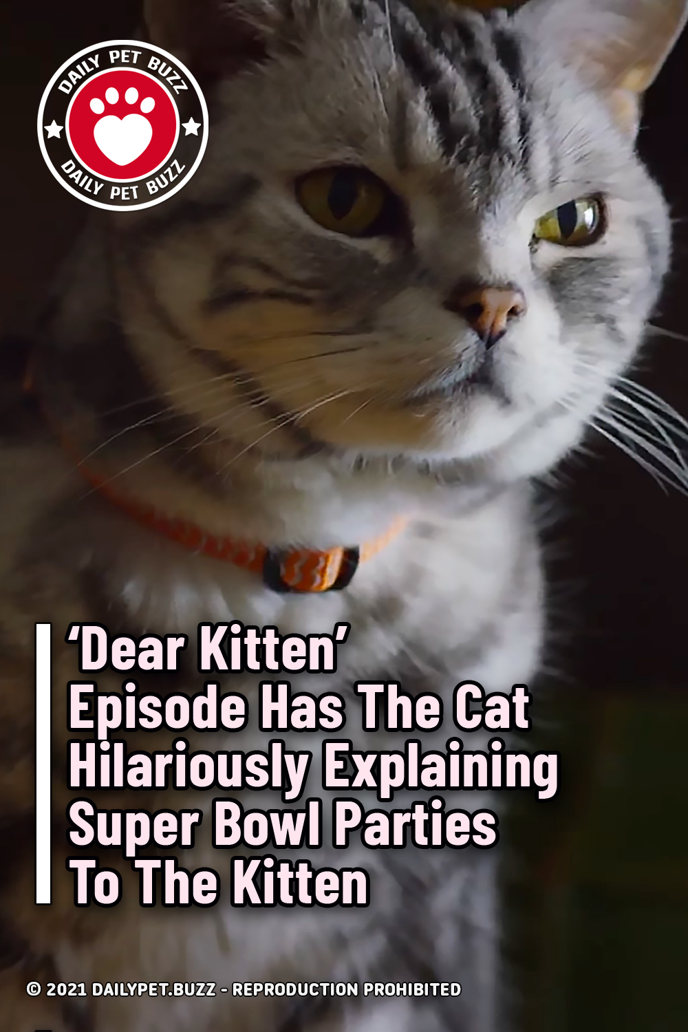 \'Dear Kitten\' Episode Has The Cat Hilariously Explaining Super Bowl Parties To The Kitten