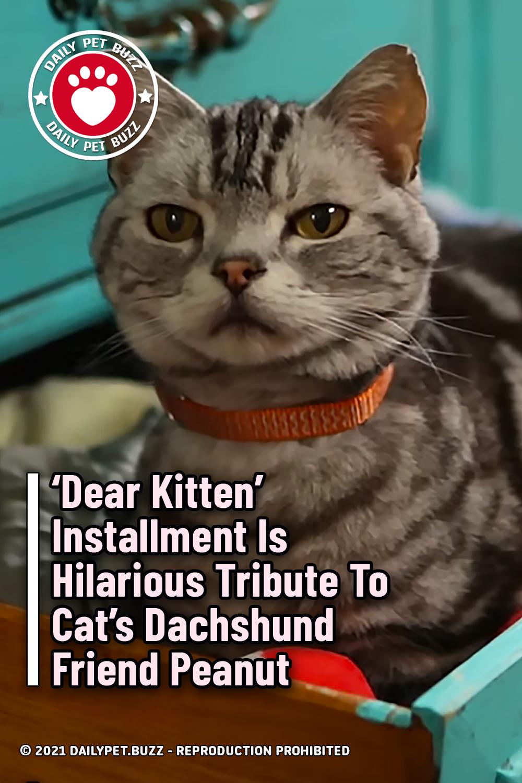 \'Dear Kitten\' Installment Is Hilarious Tribute To Cat\'s Dachshund Friend Peanut