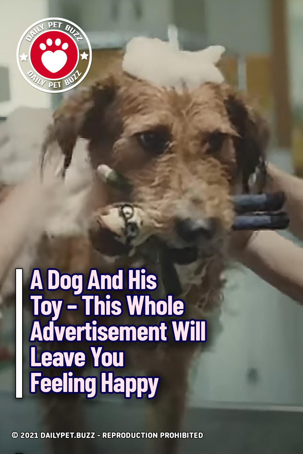 A Dog And His Toy – This Whole Advertisement Will Leave You Feeling Happy