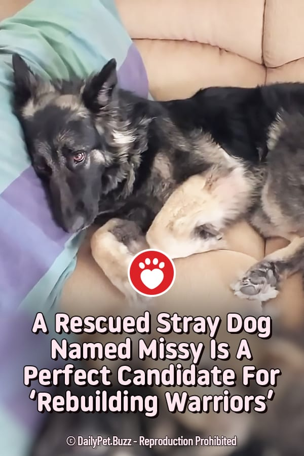 A Rescued Stray Dog Named Missy Is A Perfect Candidate For \'Rebuilding Warriors\'