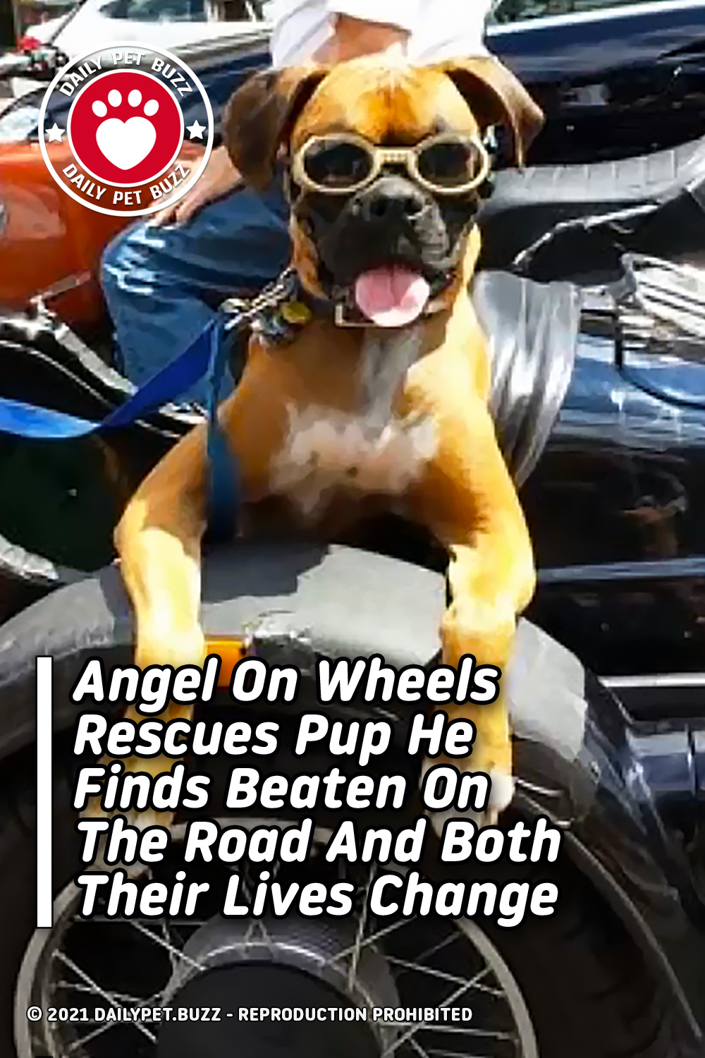 Angel On Wheels Rescues Pup He Finds Beaten On The Road And Both Their Lives Change