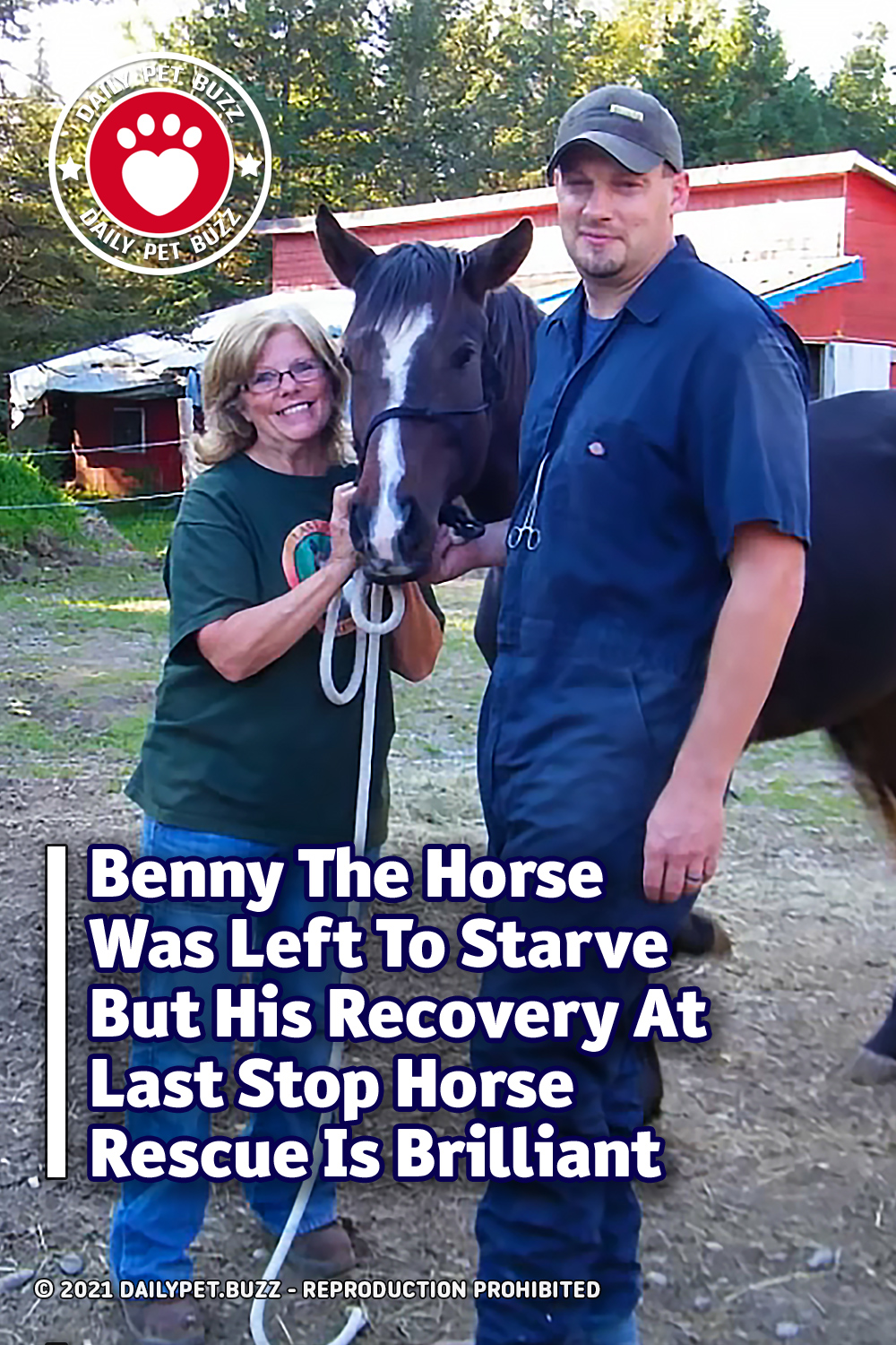 Benny The Horse Was Left To Starve But His Recovery At Last Stop Horse Rescue Is Brilliant