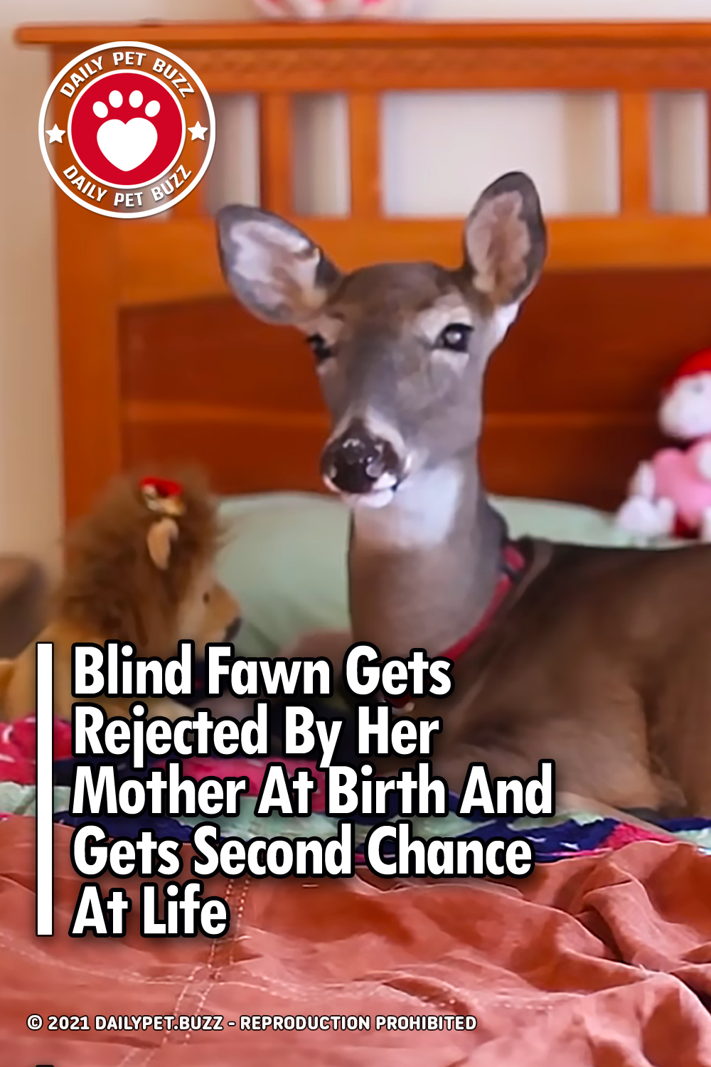 Blind Fawn Gets Rejected By Her Mother At Birth And Gets Second Chance At Life