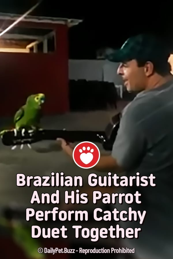 Brazilian Guitarist And His Parrot Perform Catchy Duet Together
