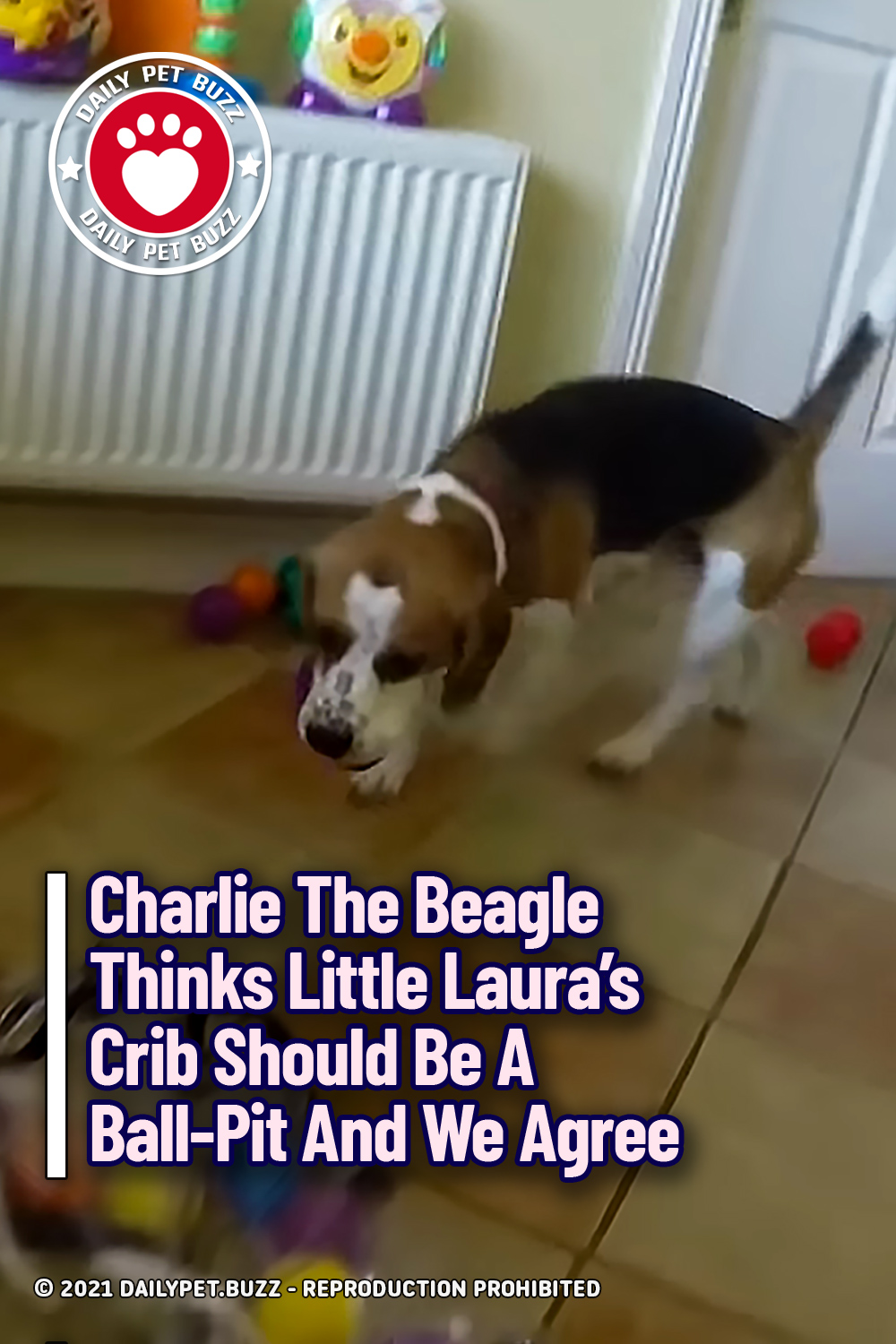 Charlie The Beagle Thinks Little Laura\'s Crib Should Be A Ball-Pit And We Agree