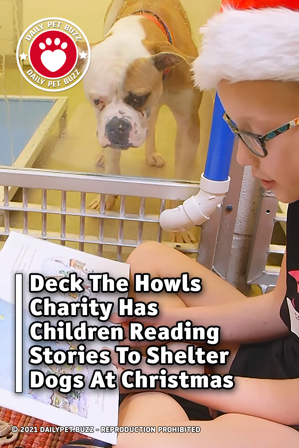 Deck The Howls Charity Has Children Reading Stories To Shelter Dogs At Christmas