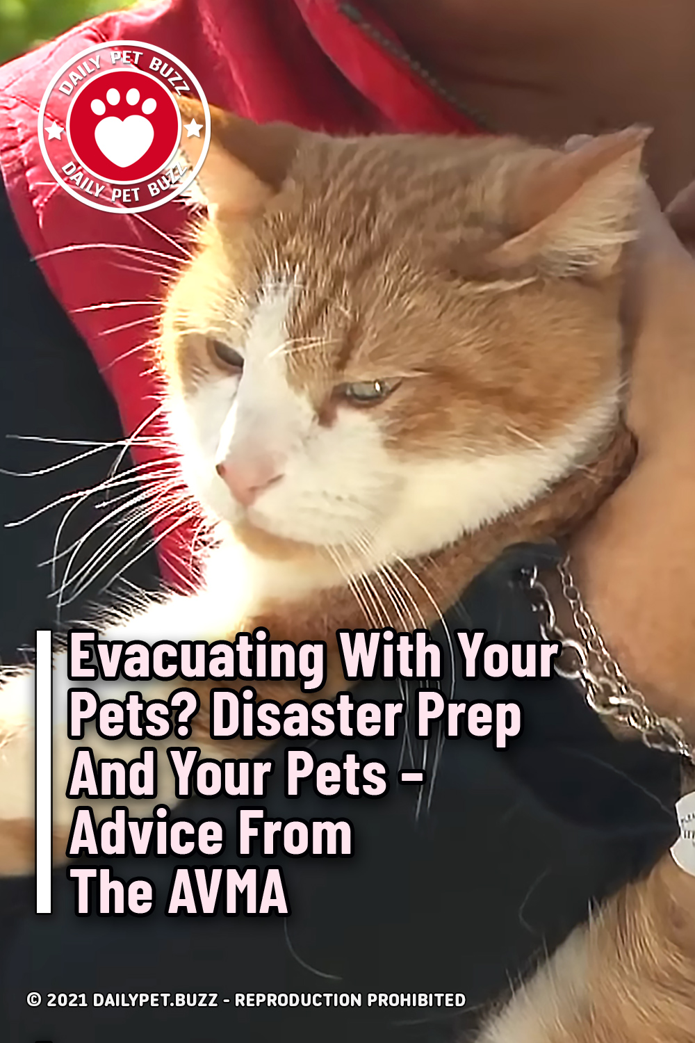 Evacuating With Your Pets? Disaster Prep And Your Pets – Advice From The AVMA