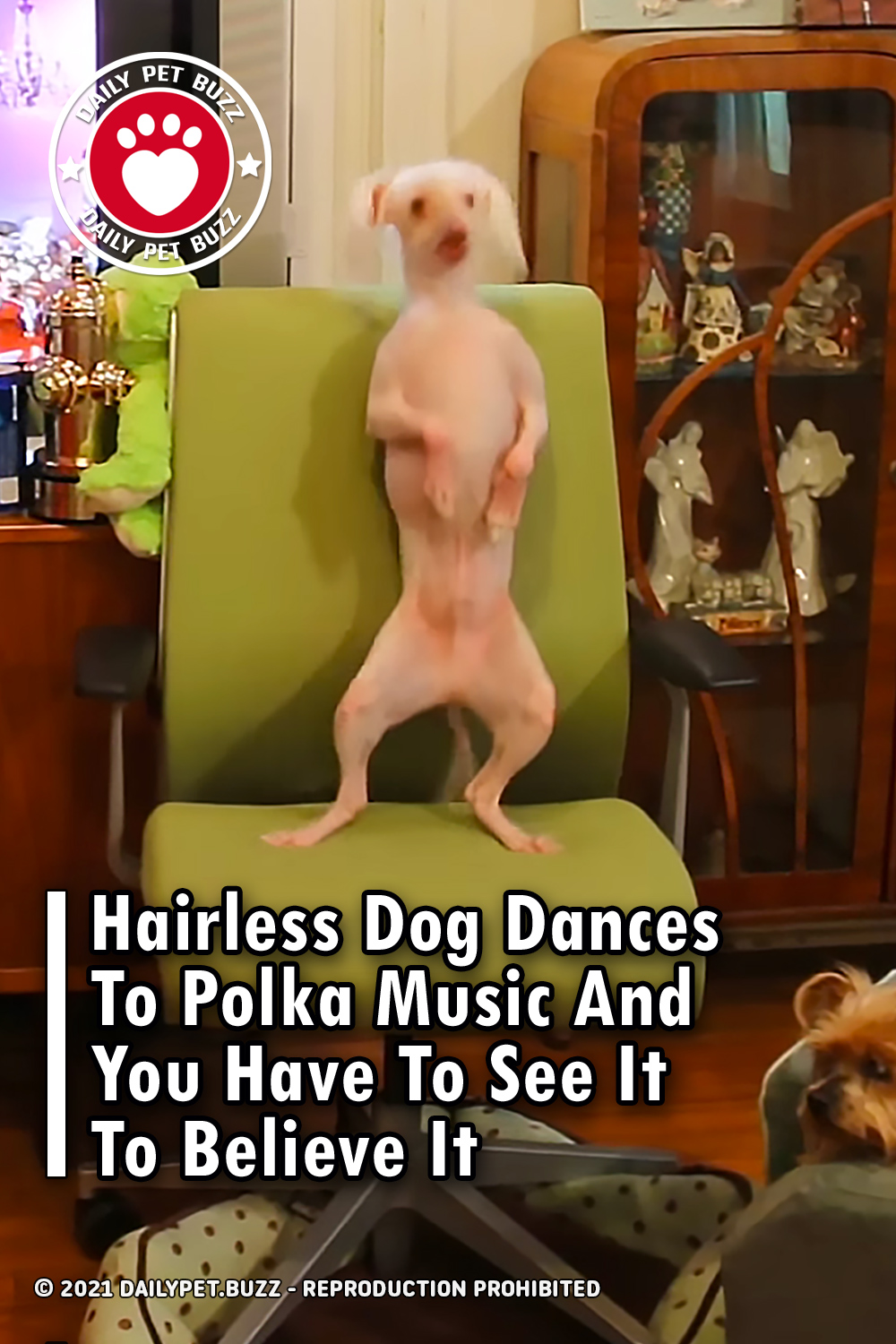 Hairless Dog Dances To Polka Music And You Have To See It To Believe It