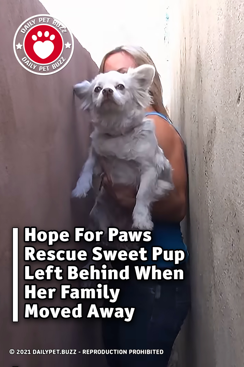 Hope For Paws Rescue Sweet Pup Left Behind When Her Family Moved Away