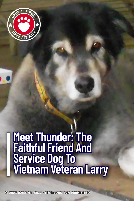 Meet Thunder: The Faithful Friend And Service Dog To Vietnam Veteran Larry