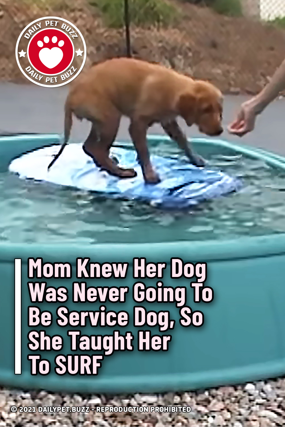 Mom Knew Her Dog Was Never Going To Be Service Dog, So She Taught Her To SURF
