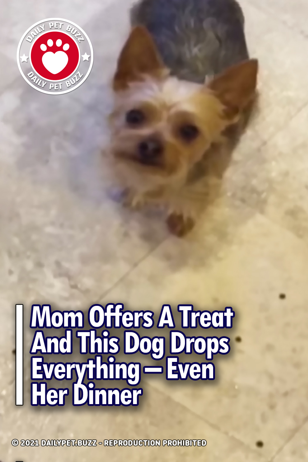 Mom Offers A Treat And This Dog Drops Everything – Even Her Dinner