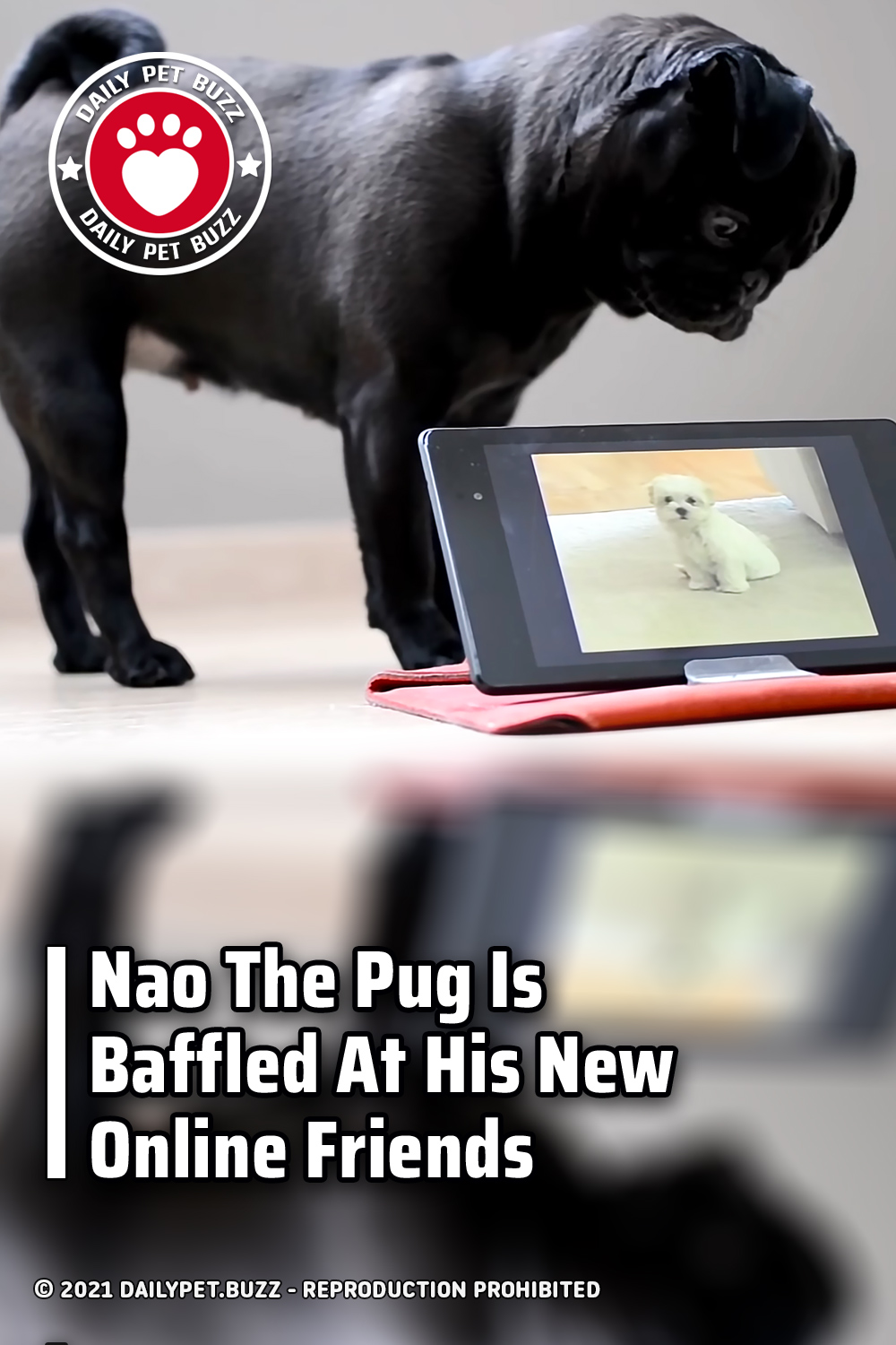 Nao The Pug Is Baffled At His New Online Friends