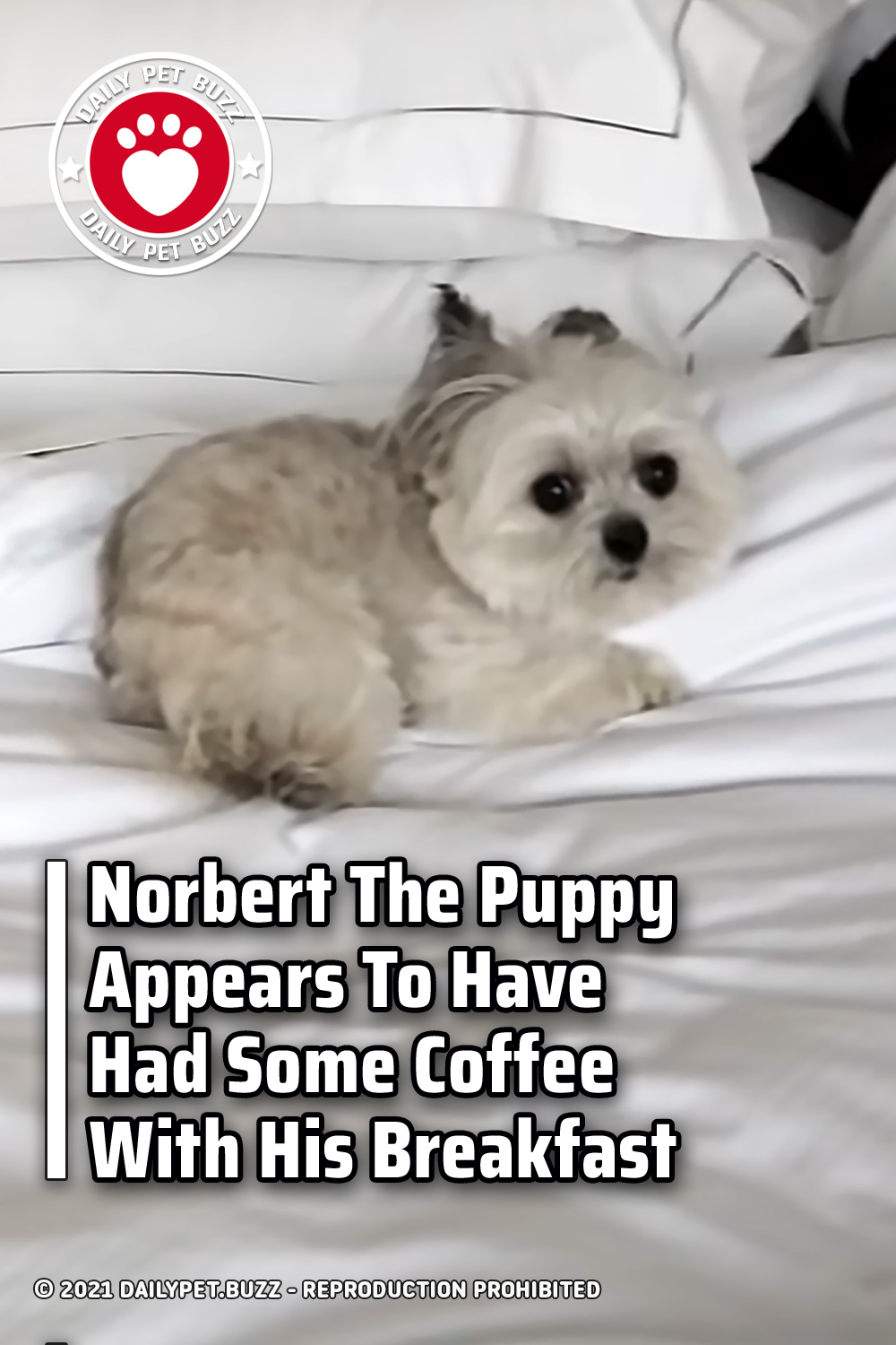Norbert The Puppy Appears To Have Had Some Coffee With His Breakfast