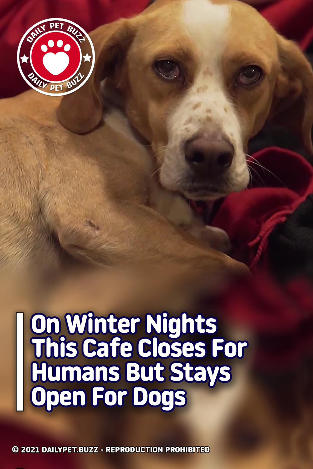 On Winter Nights This Cafe Closes For Humans But Stays Open For Dogs