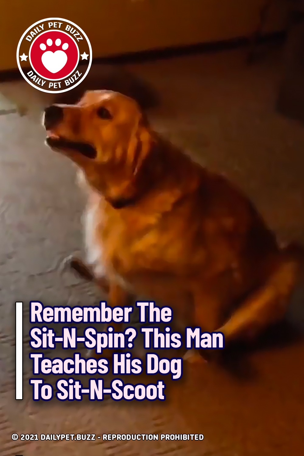 Remember The Sit-N-Spin? This Man Teaches His Dog To Sit-N-Scoot