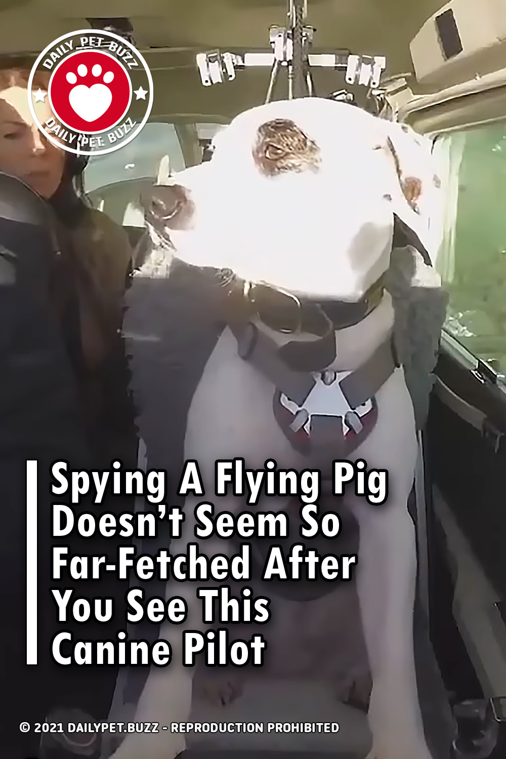 Spying A Flying Pig Doesn\'t Seem So Far-Fetched After You See This Canine Pilot