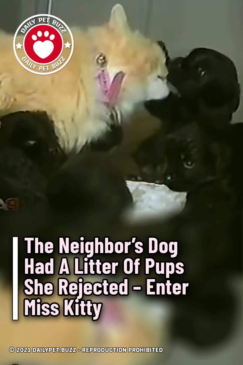 The Neighbor\'s Dog Had A Litter Of Pups She Rejected – Enter Miss Kitty