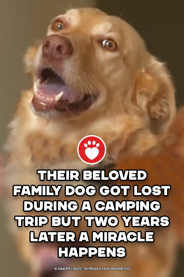 Their Beloved Family Dog Got Lost During A Camping Trip But Two Years Later A Miracle Happens
