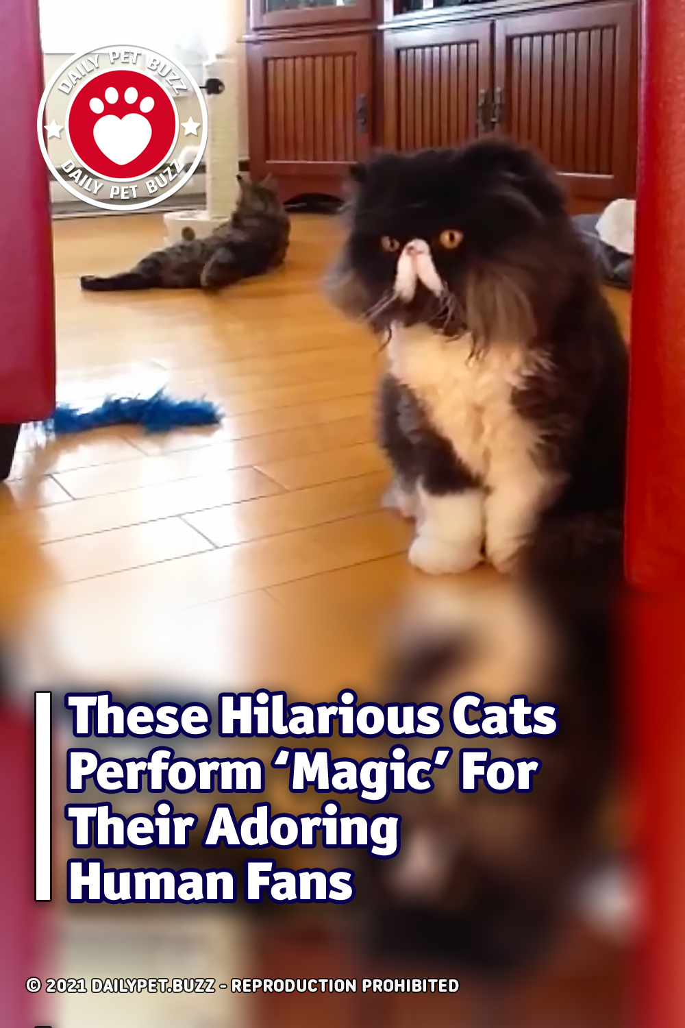 These Hilarious Cats Perform \'Magic\' For Their Adoring Human Fans