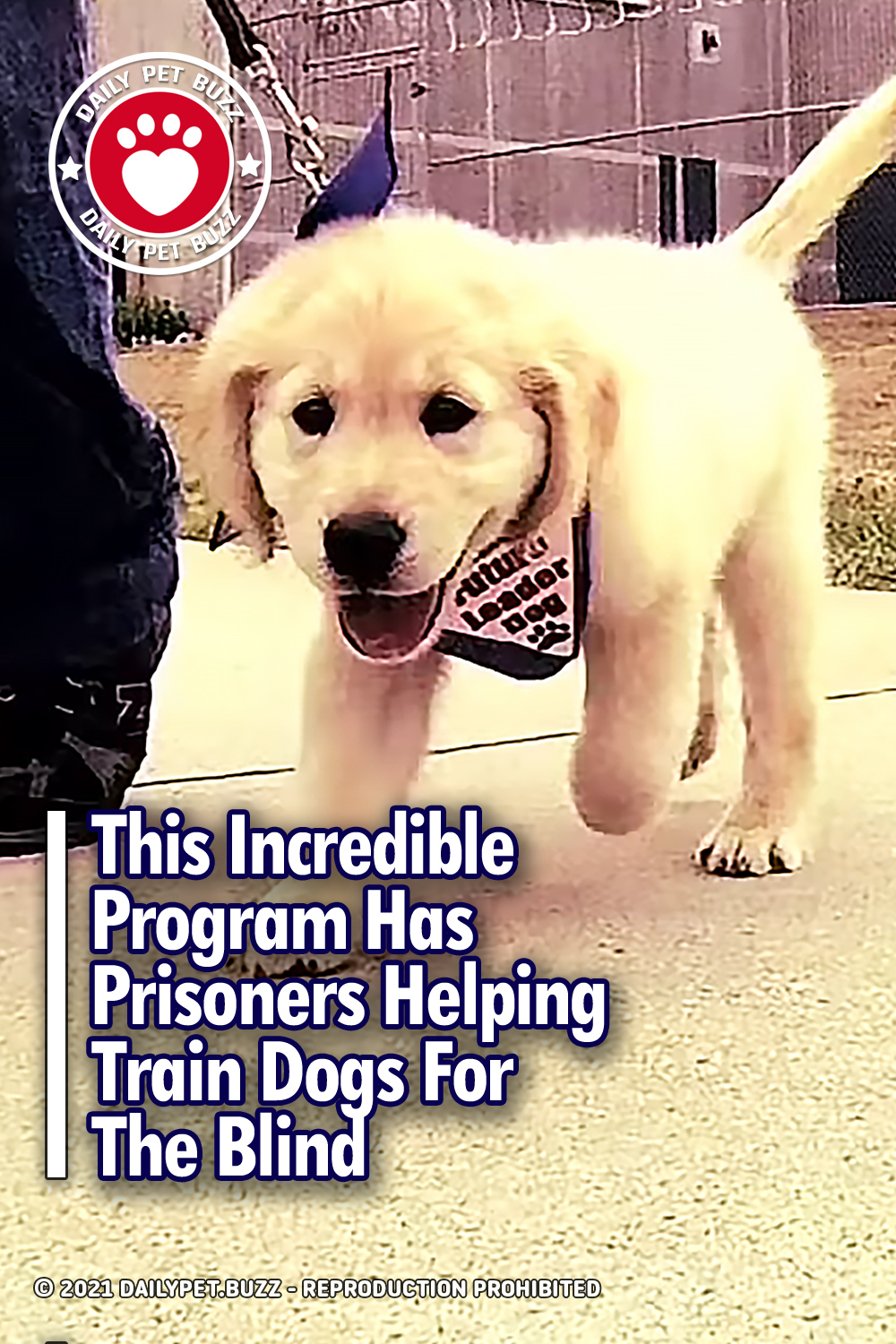 This Incredible Program Has Prisoners Helping Train Dogs For The Blind