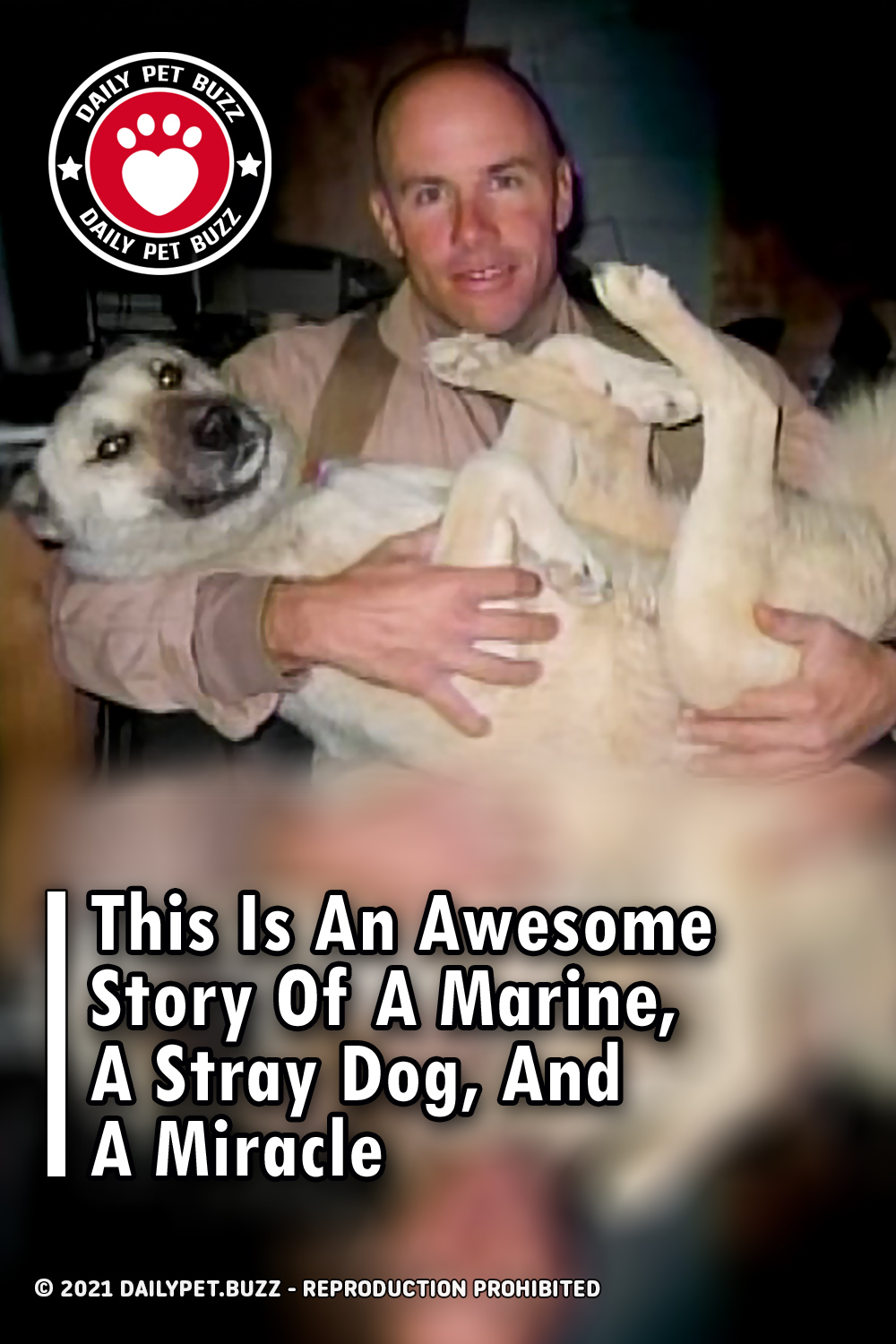 This Is An Awesome Story Of A Marine, A Stray Dog, And A Miracle