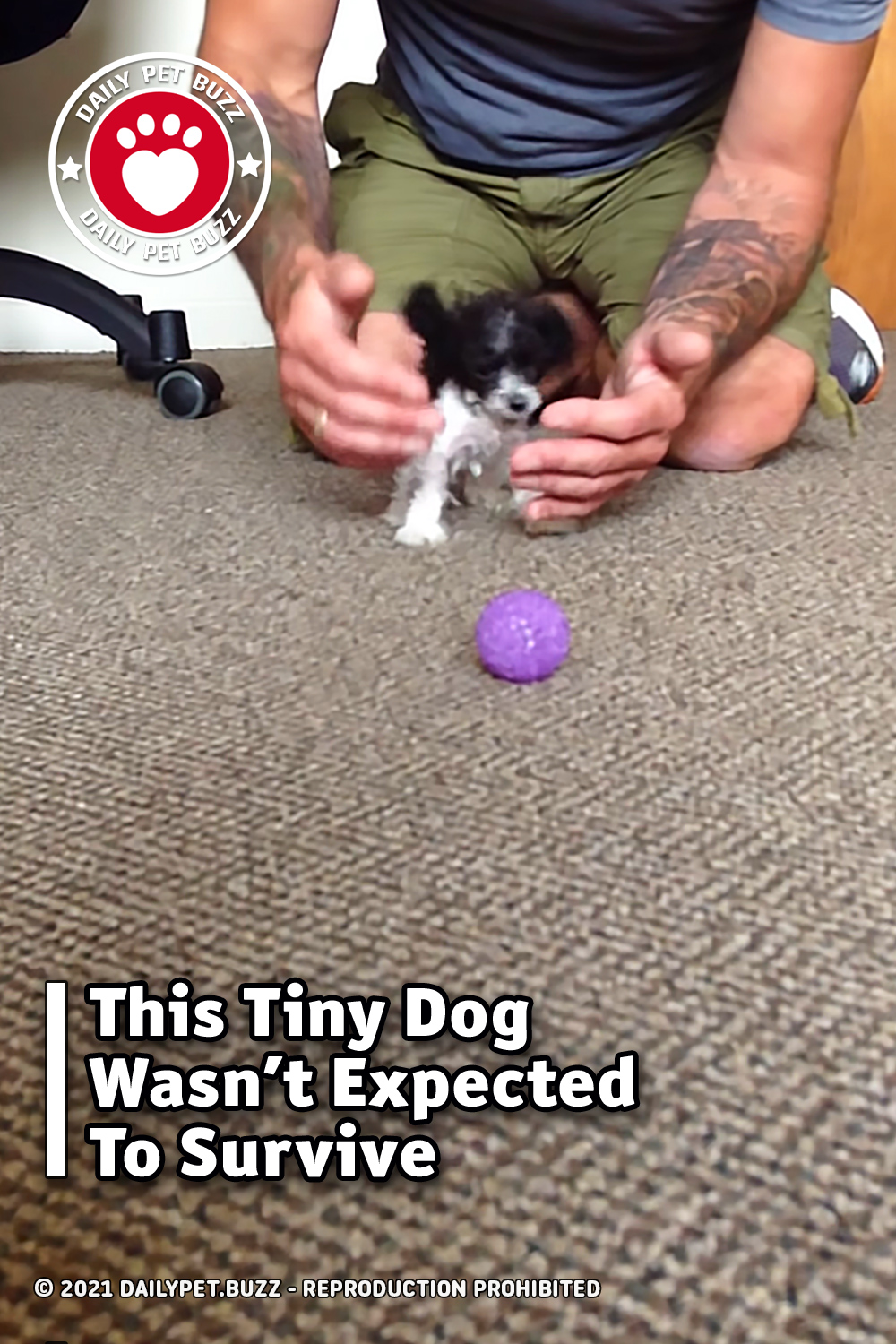 This Tiny Dog Wasn\'t Expected To Survive