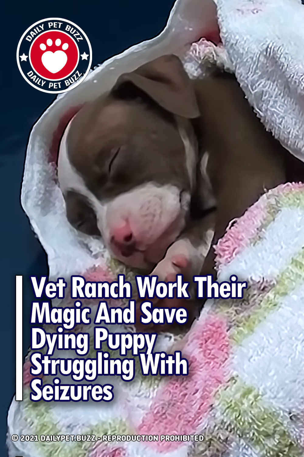 Vet Ranch Work Their Magic And Save Dying Puppy Struggling With Seizures