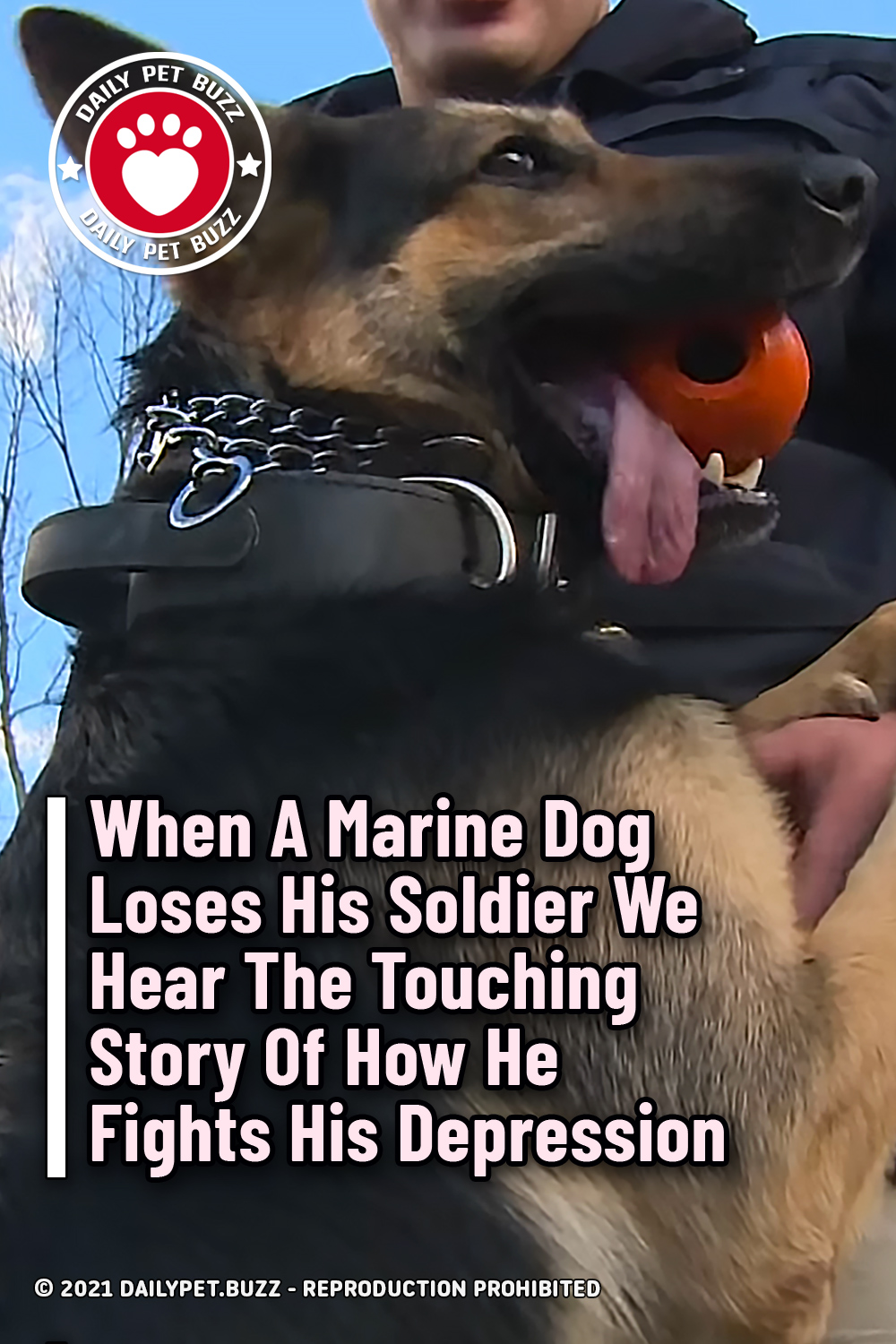 When A Marine Dog Loses His Soldier We Hear The Touching Story Of How He Fights His Depression