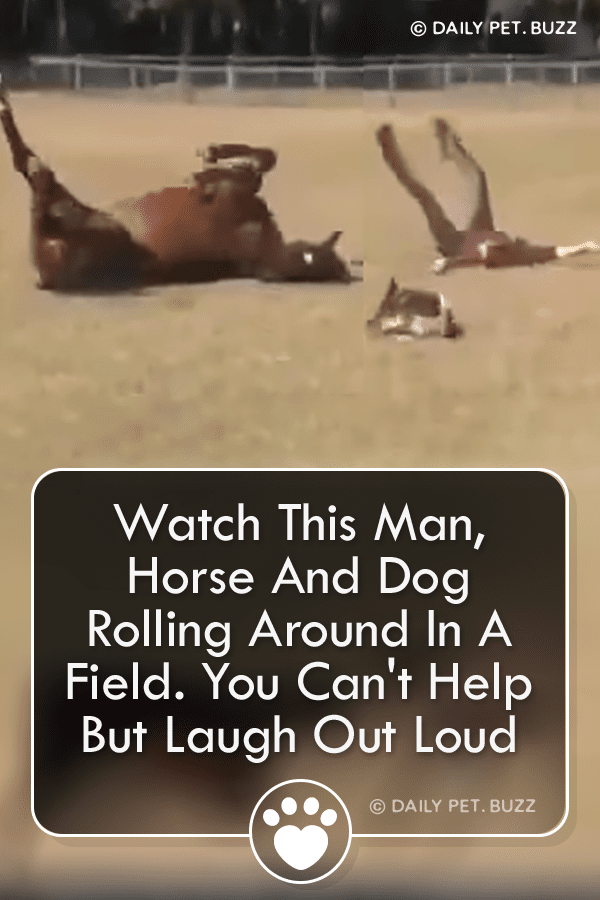 Watch This Man, Horse And Dog Rolling Around In A Field. You Can\'t Help But Laugh Out Loud