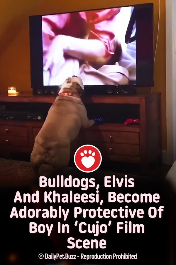 Bulldogs, Elvis And Khaleesi, Become Adorably Protective Of Boy In \'Cujo\' Film Scene