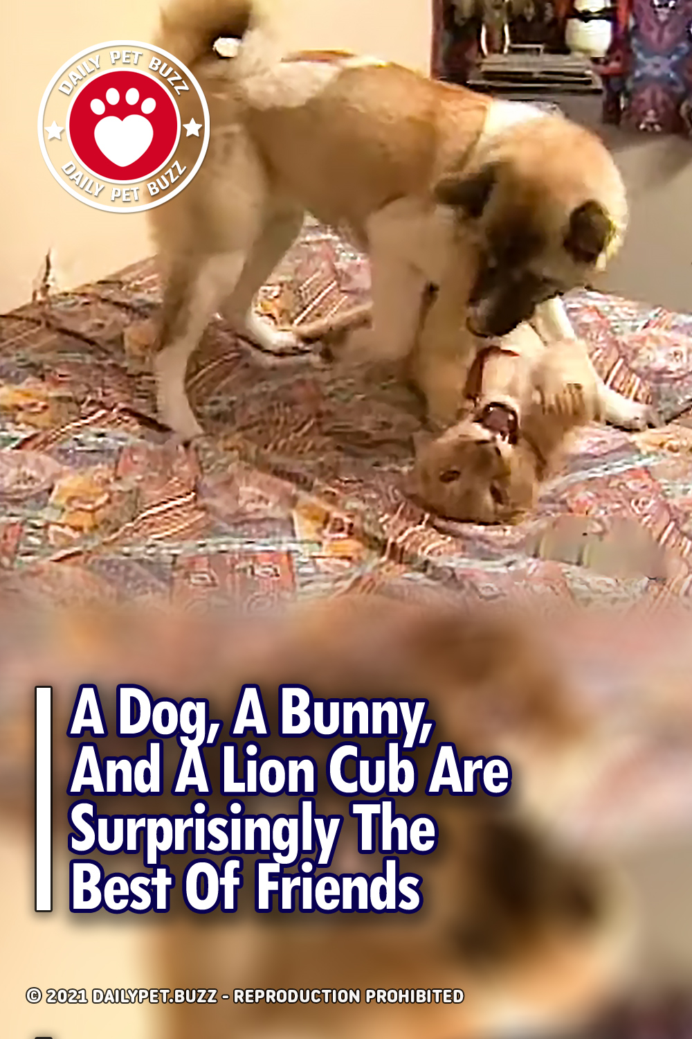 A Dog, A Bunny, And A Lion Cub Are Surprisingly The Best Of Friends