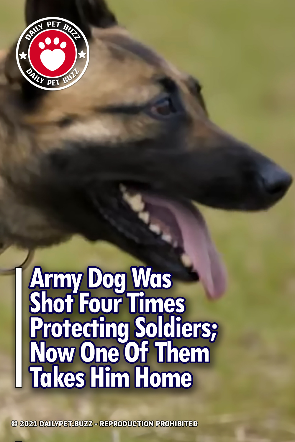 Army Dog Was Shot Four Times Protecting Soldiers; Now One Of Them Takes Him Home